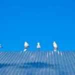 Sea gulls near Lake Ginninderra Gary Lum