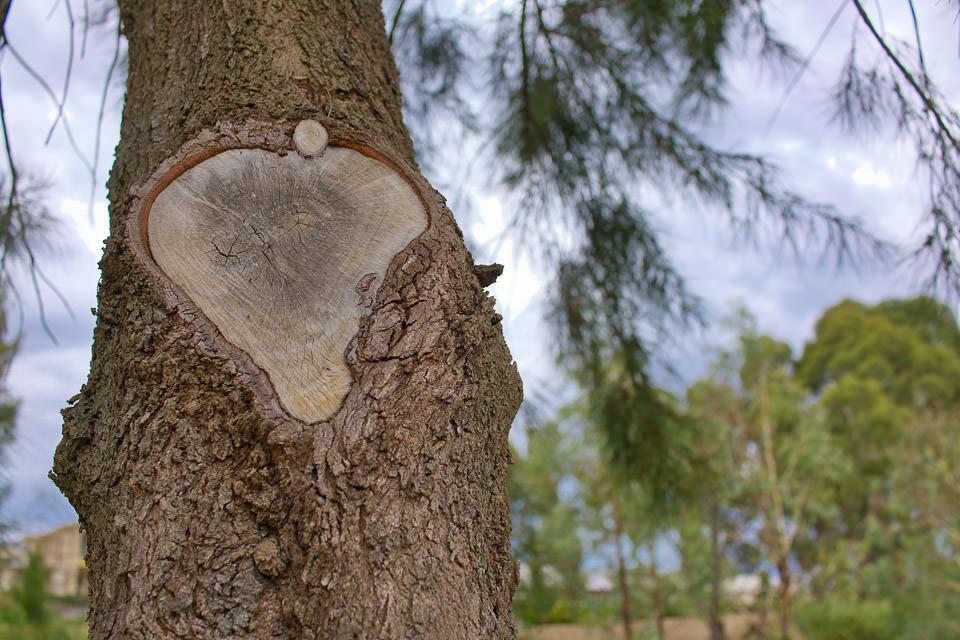 Tree near Lake Ginninderra Gary Lum