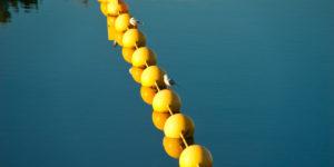 Yellow buoys and seagulls on Lake Ginninderra Reflections Gary Lum
